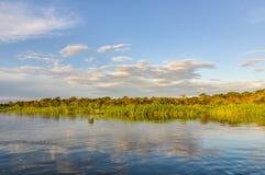 Ηλιοβασίλεμα στο τροπικό δάσος του Αμαζονίου, Manaos, Βραζιλία Στοκ εικόνες με δικαίωμα ελεύθερης χρήσης