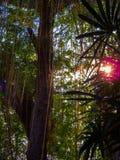Ηλιοβασίλεμα στο τροπικό δάσος Στοκ φωτογραφία με δικαίωμα ελεύθερης χρήσης
