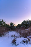 Ηλιοβασίλεμα στο χιονισμένο δάσος πεύκων με ένα ημισεληνοειδές φεγγάρι και το πολικό αστέρι στη γωνία Ρωσία, Stary Krym Στοκ Εικόνα