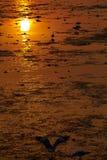 ηλιοβασίλεμα Ταϊλάνδη Στοκ Εικόνες