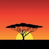Ηλιοβασίλεμα της Αφρικής Στοκ εικόνα με δικαίωμα ελεύθερης χρήσης
