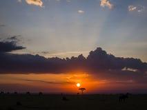 Ηλιοβασίλεμα της Mara Maasai Στοκ φωτογραφία με δικαίωμα ελεύθερης χρήσης