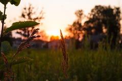 Ηλιοβασίλεμα τομέων Στοκ φωτογραφίες με δικαίωμα ελεύθερης χρήσης