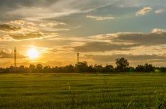 Ηλιοβασίλεμα τοπίων στον τομέα ρυζιού με τον όμορφους μπλε ουρανό και τα σύννεφα Στοκ φωτογραφία με δικαίωμα ελεύθερης χρήσης