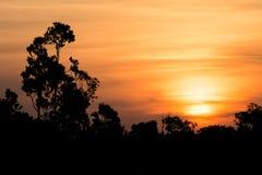 Ηλιοβασίλεμα του Αμαζονίου Στοκ εικόνα με δικαίωμα ελεύθερης χρήσης