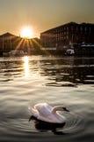 Ηλιοβασίλεμα του Κύκνου στοκ φωτογραφία με δικαίωμα ελεύθερης χρήσης
