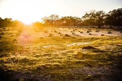 Ηλιοβασίλεμα του Τέξας από έναν τομέα των μυρμηγκιών πυρκαγιάς Στοκ εικόνες με δικαίωμα ελεύθερης χρήσης