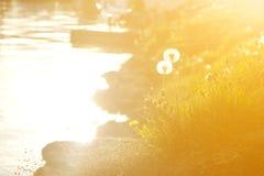 Ηλιοβασίλεμα το καλοκαίρι και τις δύο από την πικραλίδα Στοκ Εικόνα