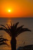 ηλιοβασίλεμα φοινικών τροπικό Στοκ Φωτογραφίες