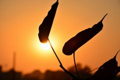 Ηλιοβασίλεμα φύλλων @ Στοκ Φωτογραφία