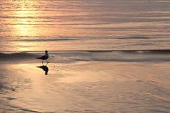 Ηλιοβασίλεμα, στοκ φωτογραφία με δικαίωμα ελεύθερης χρήσης