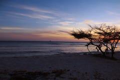 Ηλιοβασίλεμα Aruban με το δέντρο και Sailboat Divi Divi Στοκ φωτογραφία με δικαίωμα ελεύθερης χρήσης