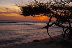 Ηλιοβασίλεμα Aruban με το δέντρο Divi Divi Στοκ φωτογραφία με δικαίωμα ελεύθερης χρήσης