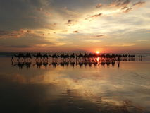 Ηλιοβασίλεμα Broome με τις καμήλες Στοκ Φωτογραφίες