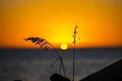 Ηλιοβασίλεμα sawgrass Στοκ Φωτογραφίες