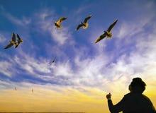 Ηλιοβασιλέματος seagulls και ανθρώπων σκιαγραφία Στοκ φωτογραφία με δικαίωμα ελεύθερης χρήσης