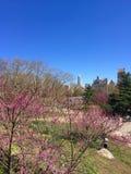 Ηλιοφάνεια άνοιξη στο Central Park Νέα Υόρκη Στοκ φωτογραφίες με δικαίωμα ελεύθερης χρήσης