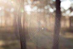 Ηλιοφάνεια και spiderweb Στοκ Εικόνα