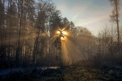 Ηλιοφάνεια πρωινού Στοκ φωτογραφία με δικαίωμα ελεύθερης χρήσης
