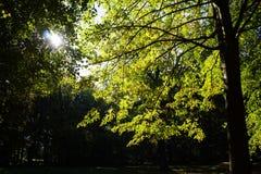 Ηλιοφάνεια σε ένα πάρκο Στοκ εικόνα με δικαίωμα ελεύθερης χρήσης
