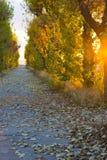 Ηλιοφάνεια σε όλα τα δέντρα Στοκ Εικόνες