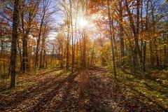 Ηλιοφάνεια στο δάσος πτώσης Στοκ Εικόνα