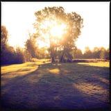 Ηλιοφάνεια φθινοπώρου μέσω του δέντρου Στοκ φωτογραφίες με δικαίωμα ελεύθερης χρήσης