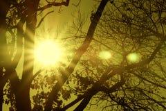 Ηλιοφάνεια Στοκ Εικόνα