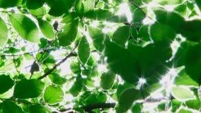 Ηλιοφάνεια φιλμ μικρού μήκους