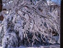 Ηλιοφώτιστοι κλάδοι βαριοί με το χιόνι Στοκ φωτογραφία με δικαίωμα ελεύθερης χρήσης