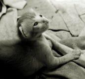 η ιστορία ενός γατακιού στοκ φωτογραφία με δικαίωμα ελεύθερης χρήσης