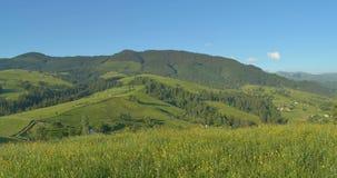 Ηλιόλουστα πράσινα βουνά Μπλε ουρανός και λιβάδι λόφων βράση Δάσος στα βουνά Όμορφα δέντρα πεύκων πανοράματος φιλμ μικρού μήκους