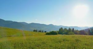 Ηλιόλουστα πράσινα βουνά Μπλε ουρανός και λιβάδι λόφων βράση Δάσος στα βουνά Όμορφα δέντρα πεύκων πανοράματος απόθεμα βίντεο