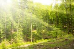 Ηλιόλουστες ακτίνες στο δάσος Στοκ εικόνες με δικαίωμα ελεύθερης χρήσης
