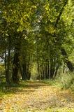 Ηλιόλουστη αλέα στο δάσος φθινοπώρου Στοκ εικόνα με δικαίωμα ελεύθερης χρήσης