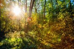 Ηλιόλουστη ημέρα στα θερινά ηλιόλουστα δασικά δέντρα Φύση Στοκ εικόνες με δικαίωμα ελεύθερης χρήσης