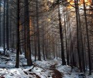 Ηλιόλουστη ημέρα στο δάσος Prewinter Στοκ Εικόνα