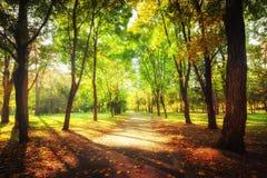 Ηλιόλουστη ημέρα στο πάρκο φθινοπώρου με τα ζωηρόχρωμες δέντρα και τη διάβαση Στοκ Φωτογραφίες