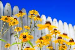 Ηλιόλουστη ημέρα - φωτεινές κίτρινες μαργαρίτες Στοκ φωτογραφίες με δικαίωμα ελεύθερης χρήσης