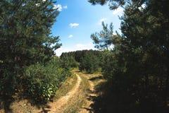 Ηλιόλουστη θερινή ημέρα στη φύση στο δάσος Στοκ φωτογραφία με δικαίωμα ελεύθερης χρήσης