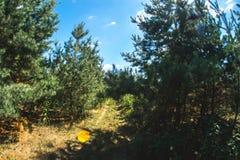 Ηλιόλουστη θερινή ημέρα στη φύση στο δάσος Στοκ Εικόνες