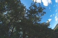 Ηλιόλουστη θερινή ημέρα στη φύση στο δάσος Στοκ φωτογραφίες με δικαίωμα ελεύθερης χρήσης
