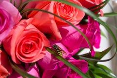 Ηλιόλουστη μέλισσα Στοκ εικόνες με δικαίωμα ελεύθερης χρήσης