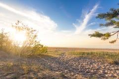 Ηλιόλουστη παραλία με τα πεύκα Στοκ Εικόνες