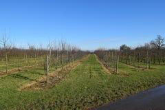 Ηλιόλουστη φυτεία μήλων Στοκ εικόνες με δικαίωμα ελεύθερης χρήσης