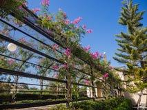 Ηλιόλουστη όμορφη διάβαση πεζών κήπων, σήραγγες λουλουδιών το καλοκαίρι Στοκ Εικόνες