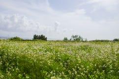 Ηλιόλουστος τομέας λουλουδιών Στοκ Φωτογραφίες