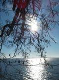Ηλιόλουστος χειμώνας landcspe Στοκ Φωτογραφίες