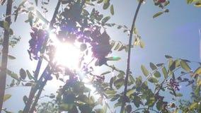 Ηλιόλουστο άνθος Στοκ φωτογραφία με δικαίωμα ελεύθερης χρήσης
