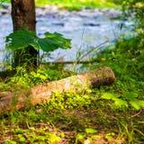Ηλιόλουστο δάσος κοντά στον ποταμό Στοκ φωτογραφία με δικαίωμα ελεύθερης χρήσης